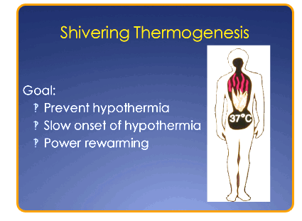 shivering_thermogenesis